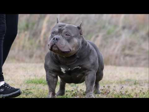 Atlanta Bully Marathon 2017 - Rhino Valley Highlight Video