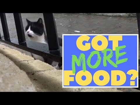 Feeding stray & homeless cats living on the streets who visit us daily seeking food and shelter.