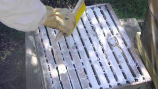 Sugar dusting.the honey bees for varroa mite control