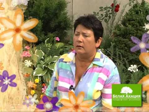 видео: Урок 8 - Цветники и клумбы - Сад и Ландшафтный дизайн