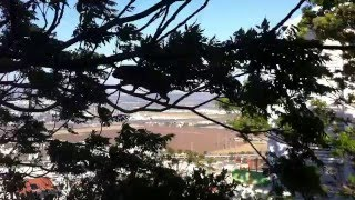 Капский даман (שפן סלע) в Хайфе
