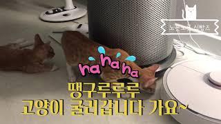 와이라노... ...  로봇 청소기와 맞짱 뜬 고양이 …