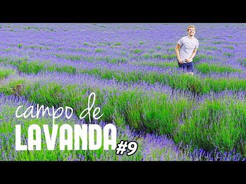 vlondon-#9:-a-saga-do-campo-de-lavanda