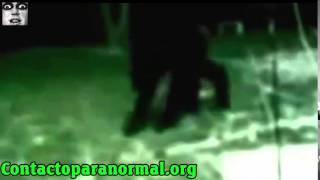 本物の狼男が捕獲さ 狼男症候群 検索動画 14