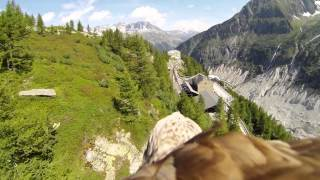 Flying eagle point of view #1