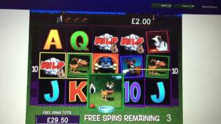Barkin Mad Bonus Free Spins Fruit Machine Coral