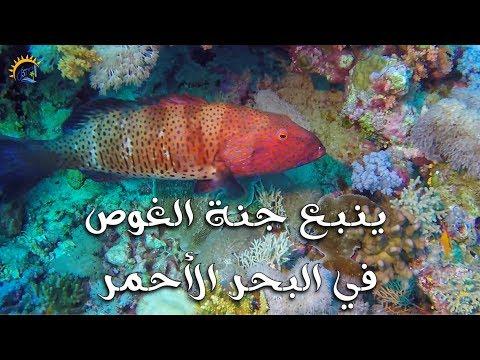 ينبع جنة الغوص في البحر الأحمر || Yanbu - Haven of Scuba Dive In The Red Sea