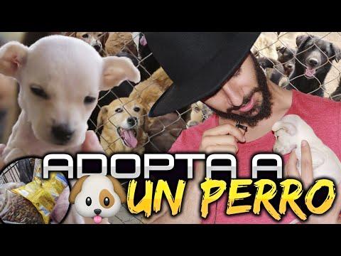 ► Adopta un Perro | Ayuda a Los que no Tienen Voz