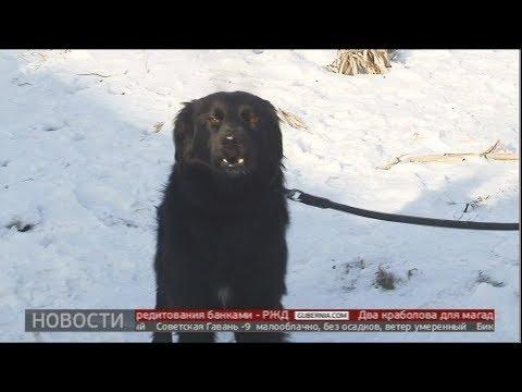 Найден в аэропорту. Новости. 16/01/2020. GuberniaTV