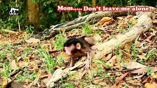 Mom..Don't leave me!!So-Pity Toni cry to stop Mom leave him|Why Tara not care,leave Toni alone