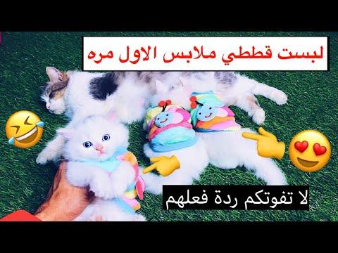 شريت ملابس لقططي الصغار 😍 صارت اشكالهم مثل الالعاب 😂💕 / Mohamed Vlg