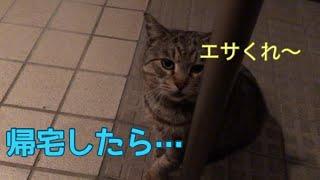帰宅したら、野良猫さんが待って居ました     #野良猫 #保護猫 保護猫活動を微力ながら 個人で行っています。 【全ての命は救えないけれども 最善を尽くしたい!