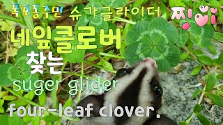 [kobo jeong] 네잎 클로버 찾아내는 슈가글라이…