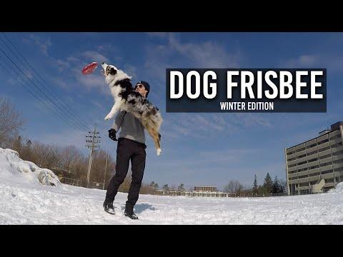 CRAZY Dogfrisbee tricks Australian Shepherd
