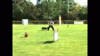 French Ring Dog Training Chicago Illinois