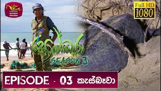 Sobadhara - Sri Lanka Wildlife Documentary | 2019-03-15 | Turtle in Sri Lanka Thumbnail