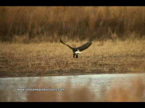 Bald Eagles Dorchester County Part 1