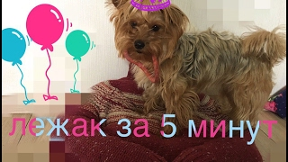 СДЕЛАЙ ЛЕЖАК ЗА 5 МИНУТ !!!