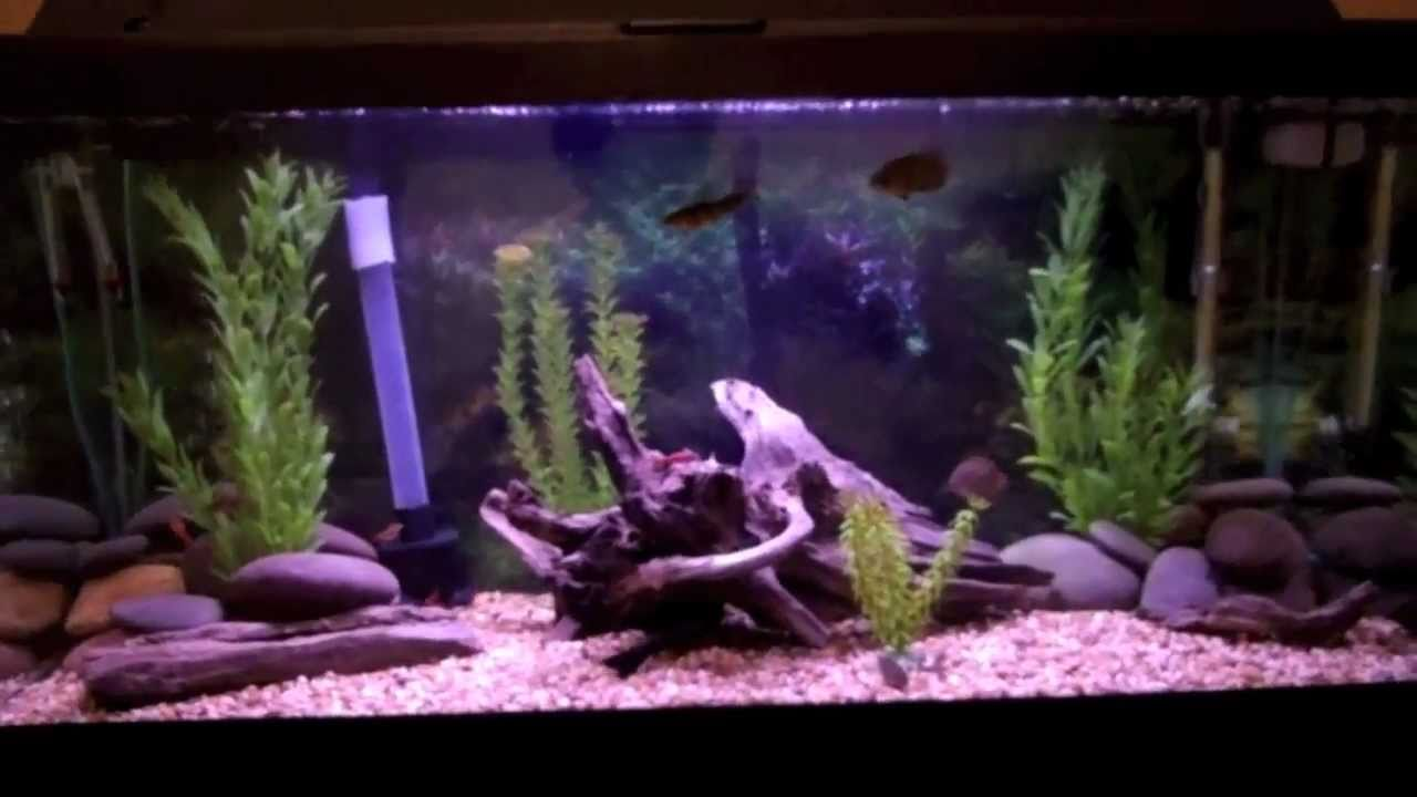Freshwater aquarium fish tank pictures - Feeding My 30 Gallon Tropical Freshwater Fish Tank