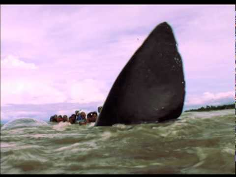 """Born to be wild: """"Whale Rescue"""" and """"Sink Hole"""""""