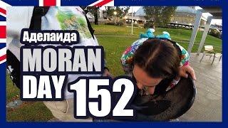 Moran Day 152 - Аделаида