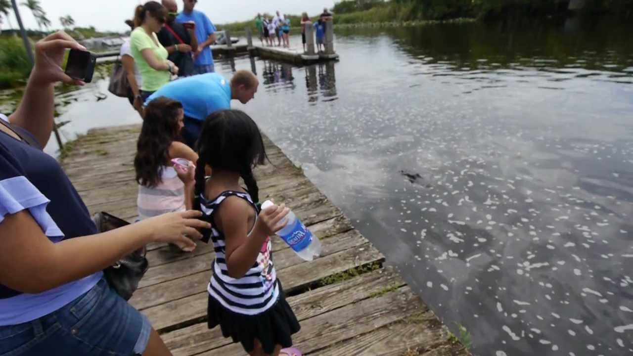 The creative writing the everglades holiday park
