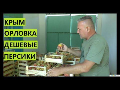 Крымский персик. Каков он?