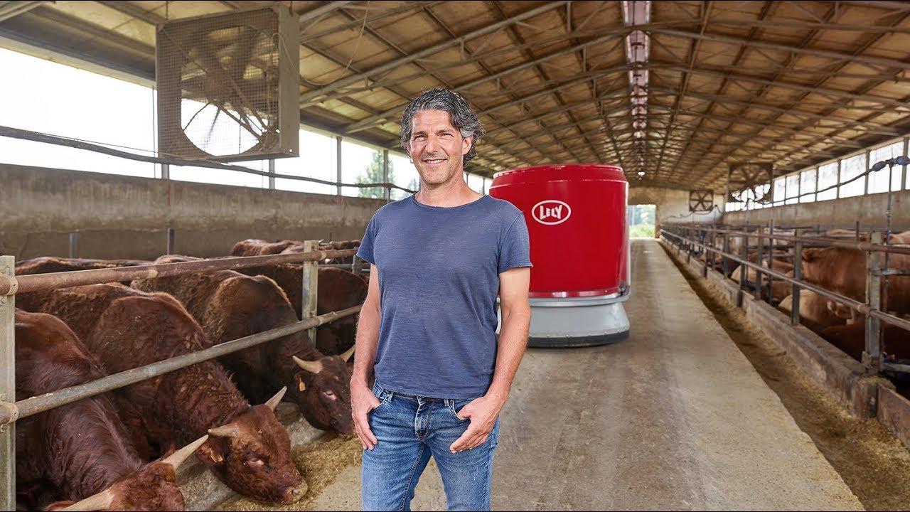 Lely Vector - Ingrassare i tori con l'alimentazione automatica