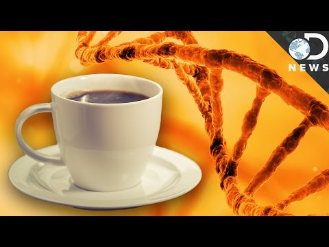 Like Coffee You Might Be Genetically Wired This Way