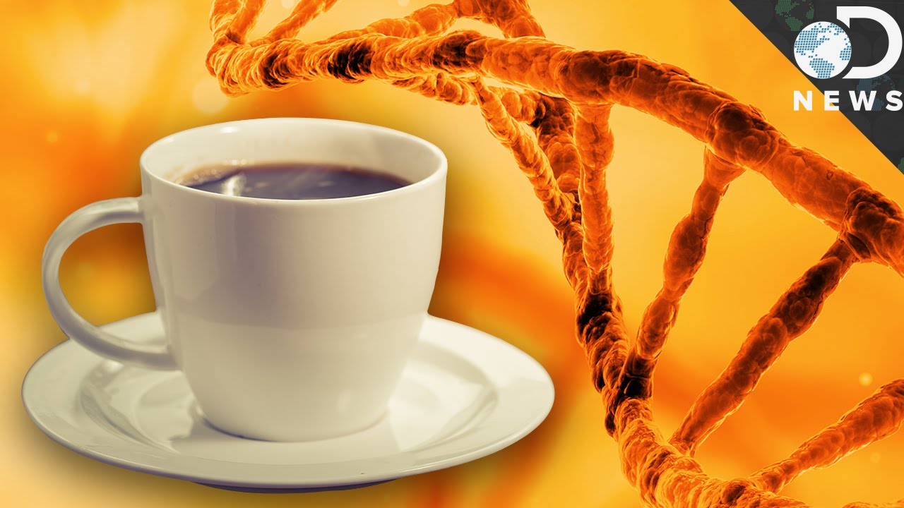 Coffee Can Break Your DNA YouTube - Good bad effects coffee can