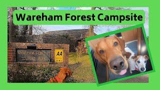 Dog Friendly Campsite in Dorset, Wareham Forest
