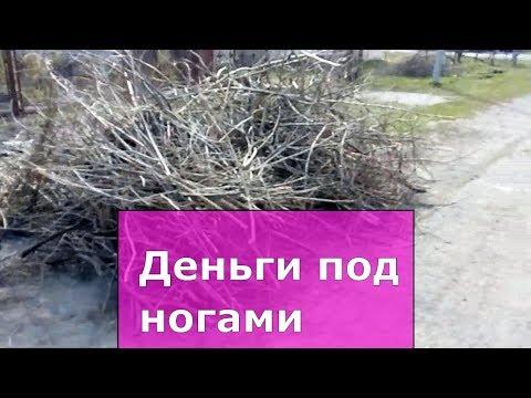 Ветки, древесные отходы.  Часть 1 Ресурсы села, бизнес  идеи на селе, как заработать деньги в селе.