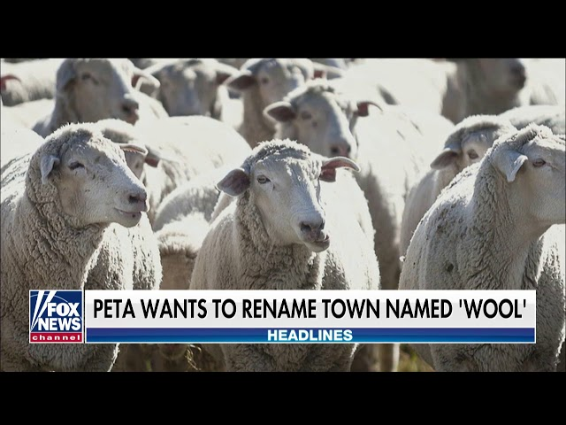 Report: PETA Urges England Village to Change Name to Vegan Wool