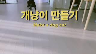 고양이훈련. 개냥이 만…
