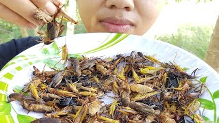 Yummy Cooking Cricket recipe -ASMR Eating Delicious -Amazing Cooking Cricket -Primitive Technology