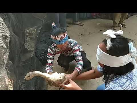 Final Tangkep 2 Bebek Bag 2 Tiyuh Pulung Kencana Rt 02 Rw 04