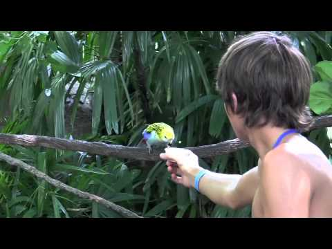 Discovery Cove, Orlando - Feeding the Birds in Aviary