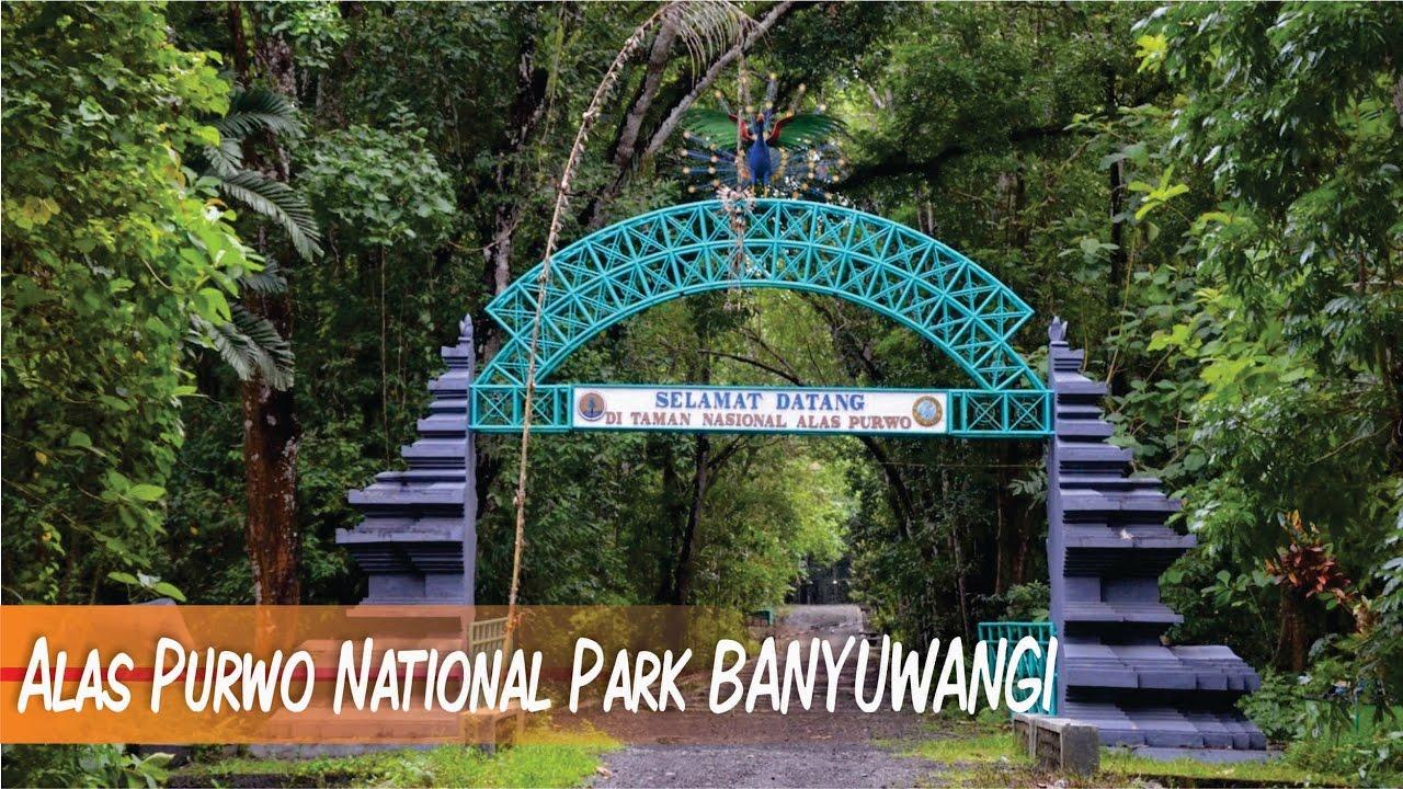Alas Purwo National Park . BANYUWANGI - YouTube