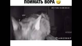 Кот и камера ночью