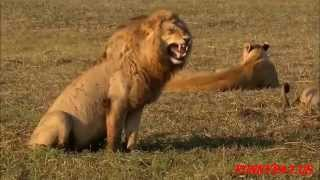 Animals Laughing Non Stop Смех животных нон-стоп