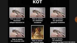 "Мега угарные приколы из интернета ""Цари коти"""