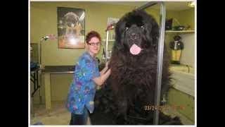こんなに大きい犬がいるんですね~でも本犬たちは 気がついていないよう...