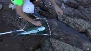 Tidal Fishing TV :: Rock Fishing NSW