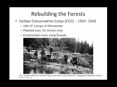 History of Minnesota Forests