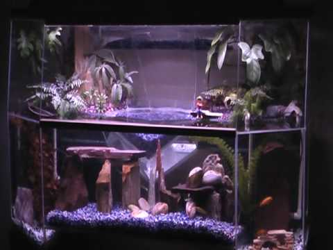 Aquariums Evolved Not Just For Fish Youtube