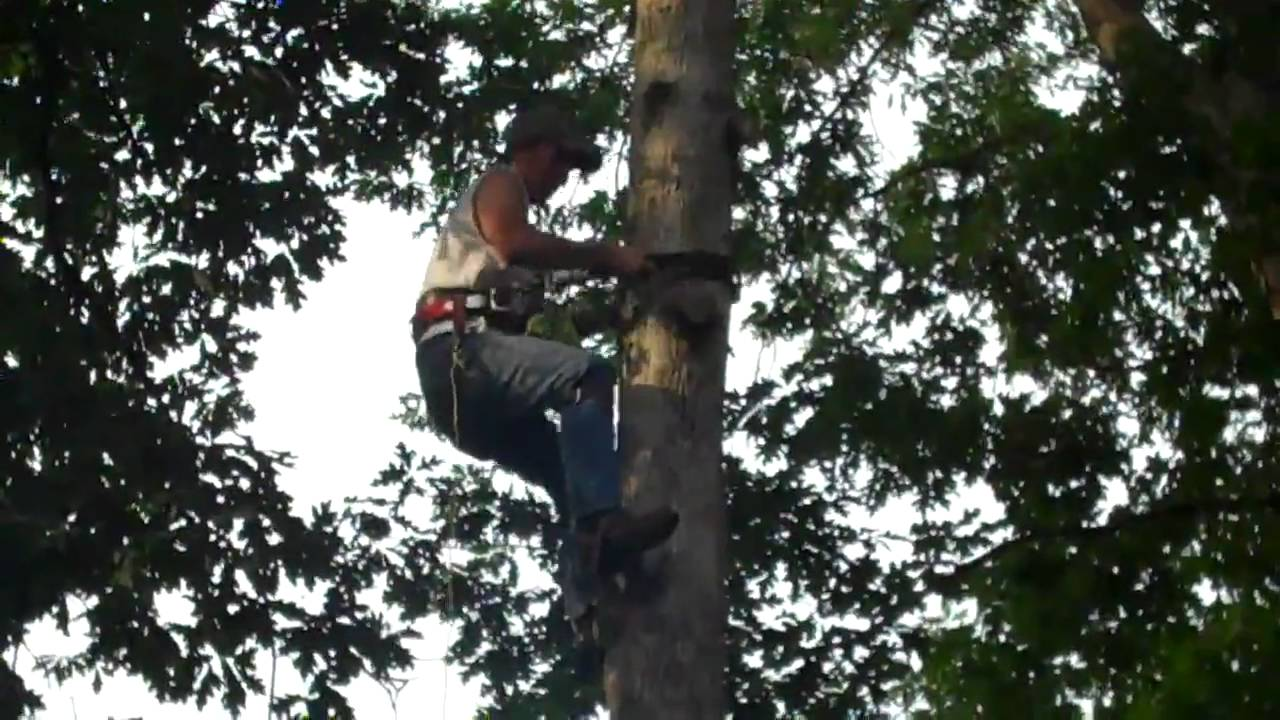 Tree Climbing Spikes - going down for the first time - YouTube