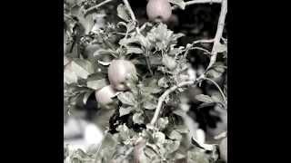 画面右下の「CC」クリックで、歌詞字幕が表示されます。 飯田のりんご並...