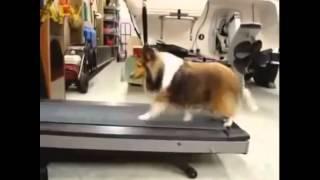 (爆笑動画)ダイエット中の犬がランニングマシーンをサボる方法を発見 thumbnail
