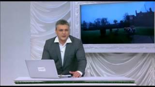 Мини СВИНКИ. Зверские новости Xayc.TV №16