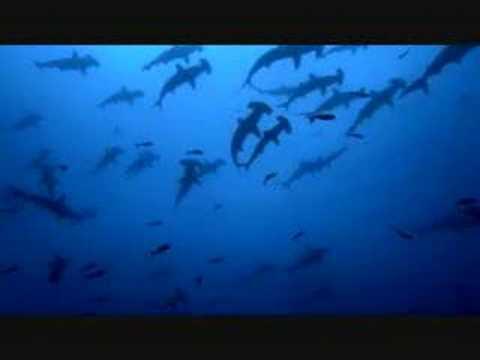Sea Shepherd - Longline Fishing Campaign - Sharkwater